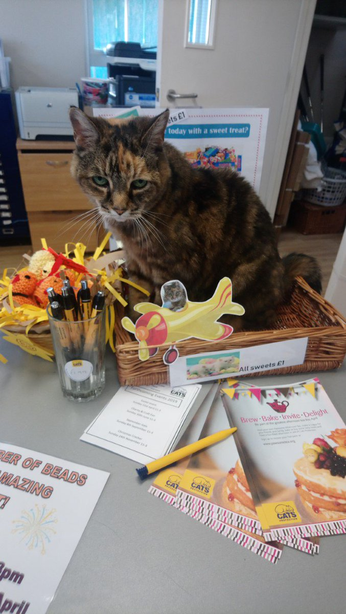 Mel @DerbySoundRadio is trying to help Jet find a #fureverhome. She&#39;s 18 yrs old on Easter Sunday. Can you help? Please RT #homejet #rehome #CatsOfTwitter #cats #MondayMotivaton #Derbysound #KittyLoafMonday #rescuecat<br>http://pic.twitter.com/70RkJsTW2x