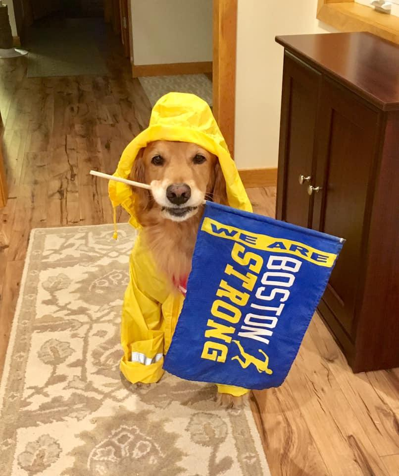 This adorable lil guy will be out cheering on runners again today in Hopkinton! :Rich Powers #BostonStrong  #BostonMarathon2019<br>http://pic.twitter.com/YwHkpWXaeb