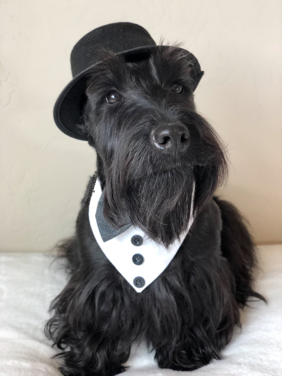 """#TitanicRemembranceDay is dedicated to the """"unsinkable"""" ship and the 1500 people that died on this day back in 1912. Titanic II is being built and will sail in 2022 along the original journey. Would you sail on the Titanic II or too much superstition? #titanic #dapperdog<br>http://pic.twitter.com/FK5ca1AihQ"""