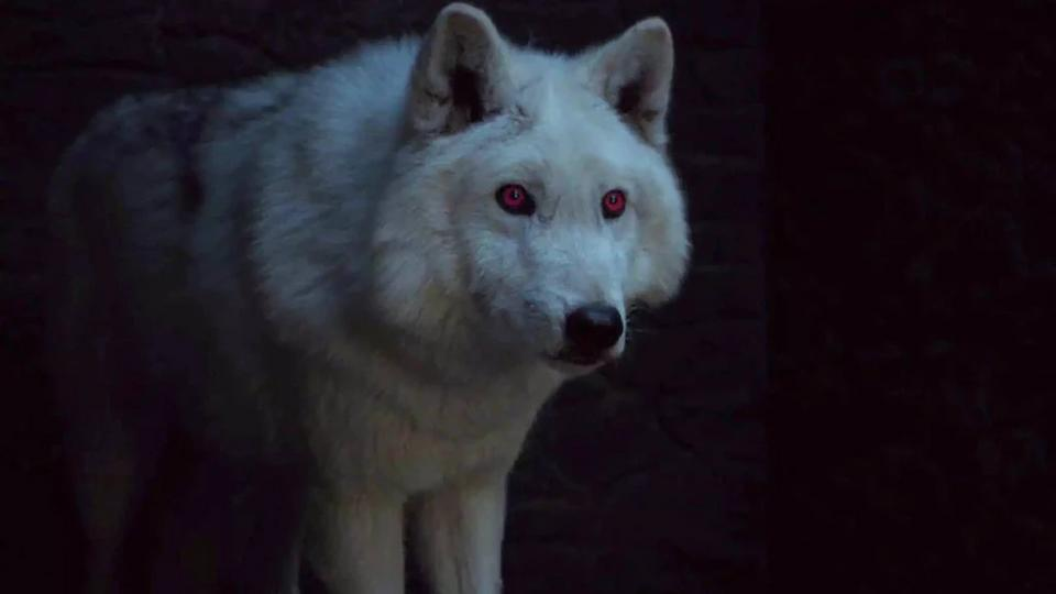 """Seriously, Where Is Ghost On """"Game Of Thrones""""?"""