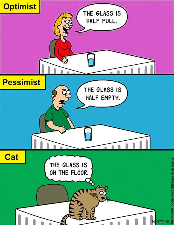 The human and I think we need to get a new perspective on things. They've decided to practice optimism while I plan to pursue a more feline mindset. The only difference between the two is mine requires more paper towels and a broom... #CleanUpOnAisleThree #MondayMotivation<br>http://pic.twitter.com/MlRhx2x3QE