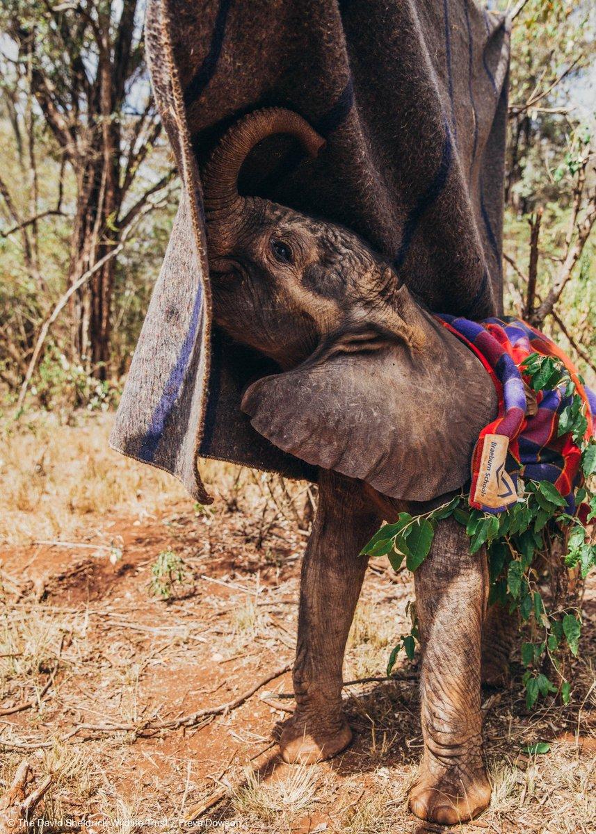 Sheldrick Wildlife's photo on #charitytuesday