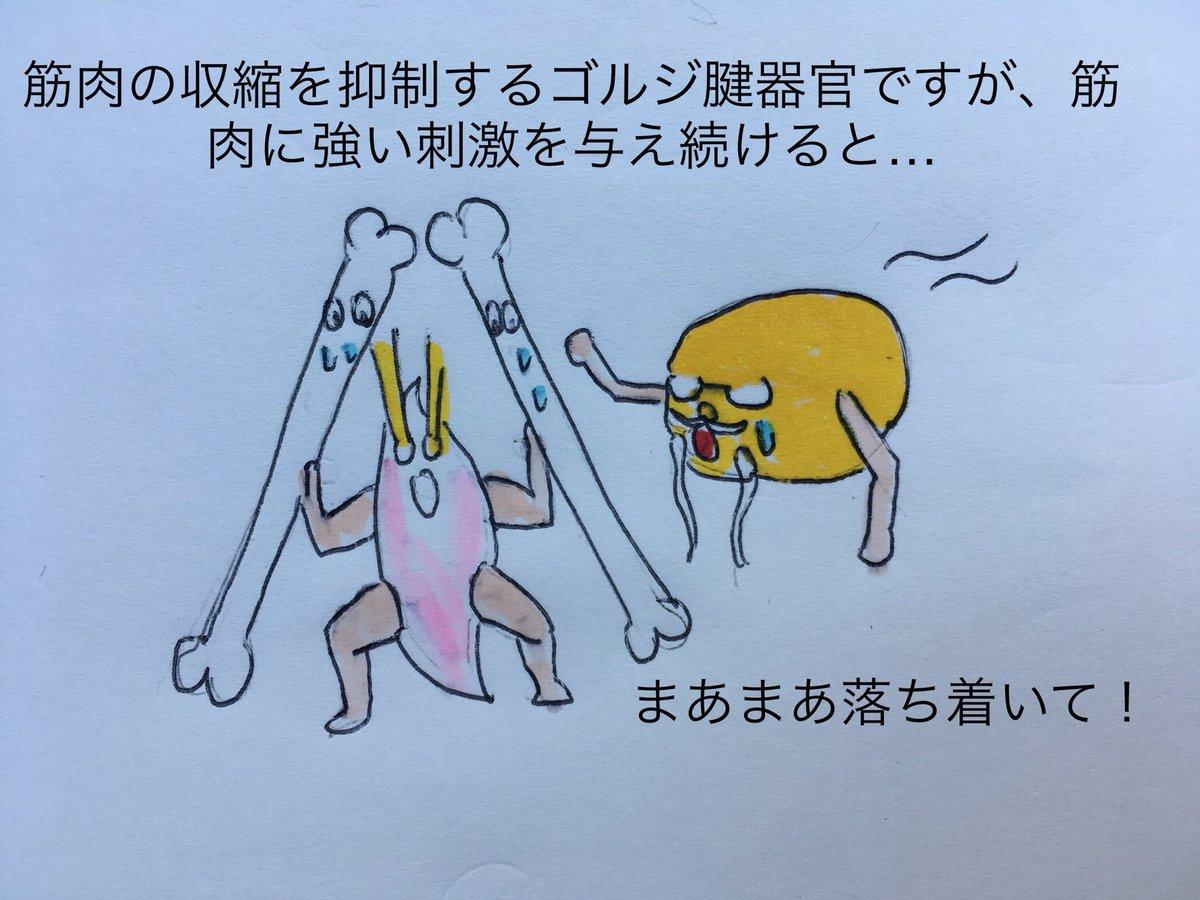 腱 器官 ゴルジ