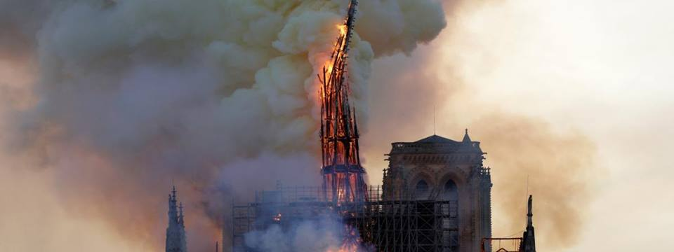 Paris France and the world are sad this morning about the terrible destruction of #NotreDame. But it will be rebuilt and reborn. Money is rising already, massively. When species die out, $ is not rising, the world is not crying. And they die forever. I am doubly sad this morning.