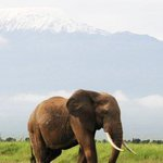 Image for the Tweet beginning: It is #savetheelephant day today