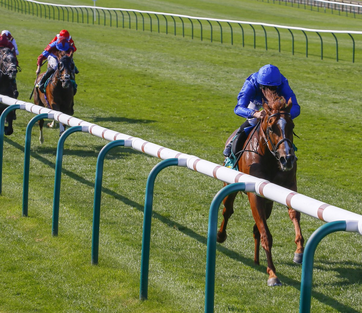 My Racing Tips's photo on #newmarket