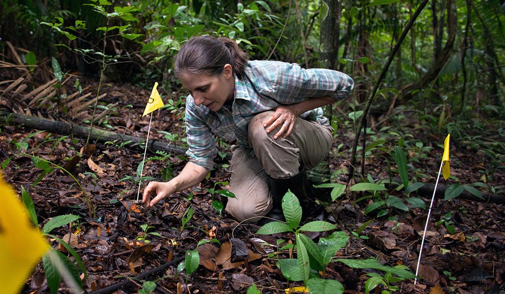 .@YaleFES's Liza Comita receives @NSF CAREER award for research on diversity of tropical forests https://bit.ly/2XjR5eH  #TropicalForestry