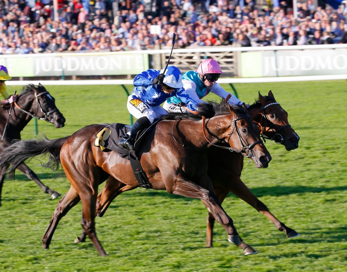 William Hill Racing's photo on #newmarket