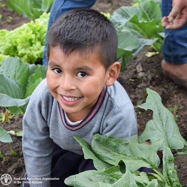 🍏Learn about healthy food 🍅Learn how to grow food 🥕Develop team skills 🍊Promote better nutrition 🌽Learn about where our food comes from  The benefits of school and community gardens are endless.   #ZeroHunger #FutureofFood