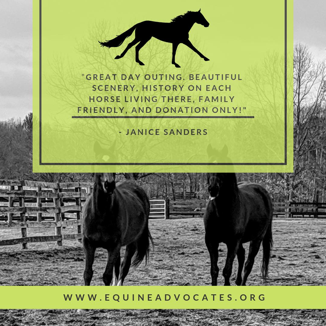 Equine Advocates's photo on #TuesdayThoughts