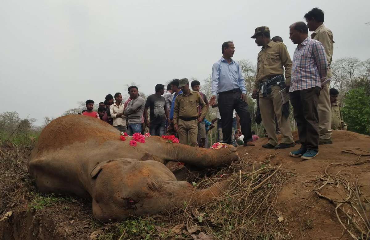 A female #elephant mowed down by #Guwahati Lido intercity express on #Savetheelephant day and the anniversary of the first #train in #India from Thane to BombayVT. The #tragedy of our times!  @vivek4wild @RailMinIndia @CMOfficeAssam