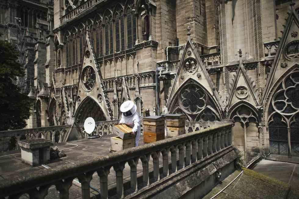 RT @jollyjoylavraie #NotreDameDeParis Nous n'avons pas seulement perdu Notre Dame ,mais aussi +de 1000 ruches d'abeilles qui avaient trouvé leur maison Ne pleurons pas juste pour la perte de quelque chose du passé. Nous avons aussi  perdu quelque chose de très précieux pour conserver notre avenir