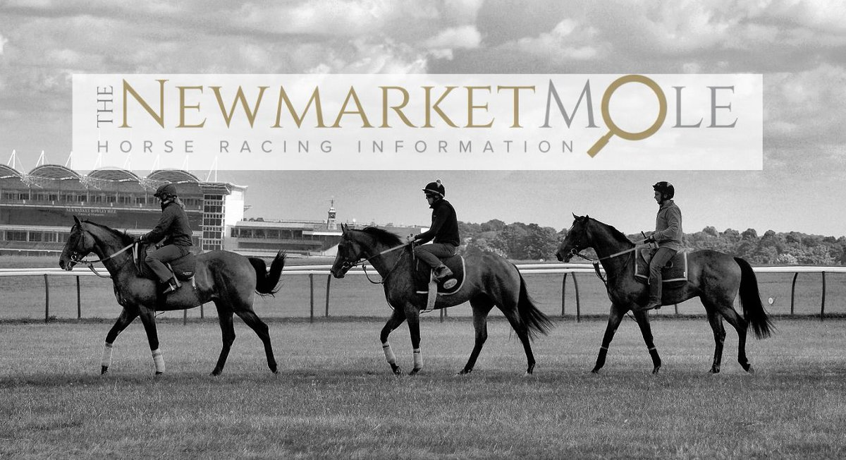 The Newmarket Mole's photo on #newmarket