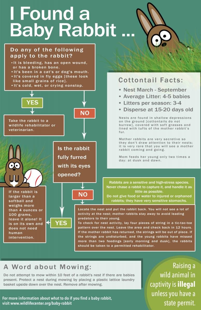 So, you found a baby rabbit... now what? Weve admitted over 70 young cottontails during the past month alone - but were far from seeing the last of them! Keep our flow chart handy so you can be prepared: buff.ly/2GhfniU #TuesdayThoughts #Wildlife