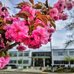 It's spring at GSA's Northwest Arctic Region headquarters in Auburn, Washington and the Japanese Cherry Trees are in full bloom. Follow @US_GSAR10 and go to https://t.co/BsaEmibzlb for the latest on GSA's Northwest Arctic Region!