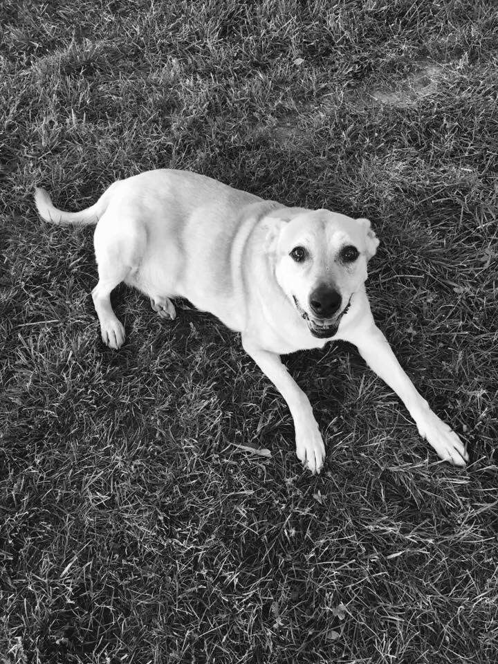 I just said a tearful goodbye to the best dog ever...Fred. He was Jessica &amp; Ashley's dog. They watched my dogs when I was in the hospital last year. They were kind enough to bring him by before he goes to the park and then to be euthanized. I will miss you Fred. #dogsoftwitter <br>http://pic.twitter.com/CcjEjcUfhd