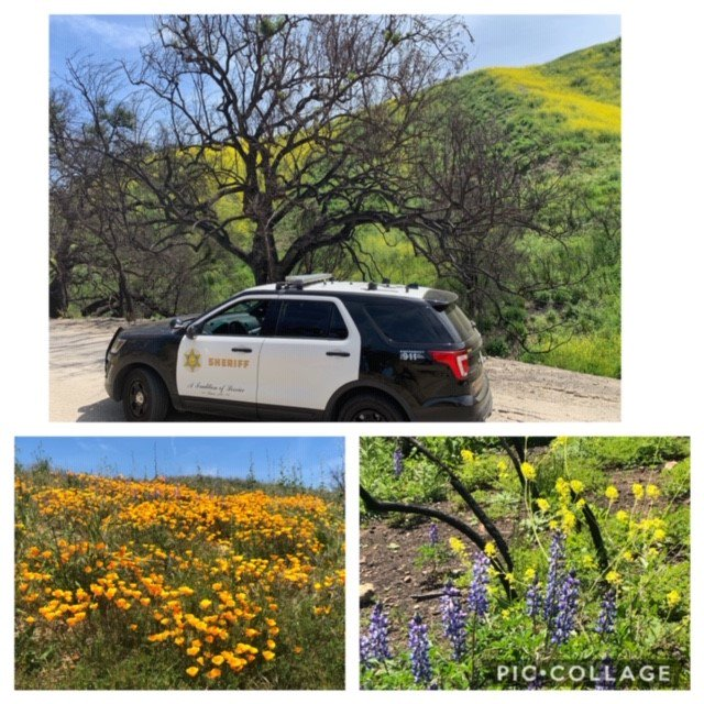 From the devastation of the #WoolseyFire to the beauty of the #SuperBloom. https://t.co/yK595OgkSd
