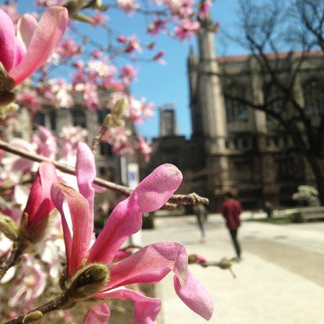 Oh hi spring. #carillon http://bit.ly/2IBHAnc