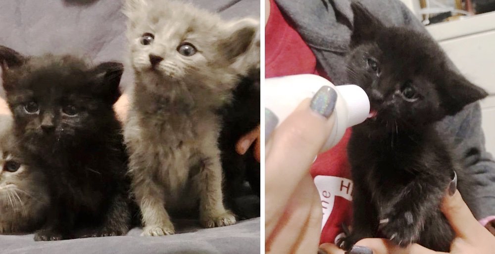 Rescuer saved 3 kittens from a burned house and went back to find their remaining sibling. See full story and updates: lovemeow.com/kittens-rescue…