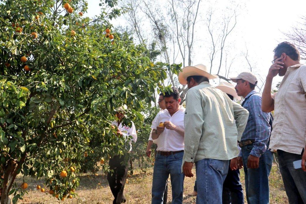 Visitamos los huertos de #NaranjaValencia de mis amigos del ejido de #Parajes en #Huejutla, para continuar con la encomienda del Gobernador @omarfayad de generar proyectos y estrategias para incrementar las ganancias de nuestros pequeños #Productores. 🍊🍊  #HidalgoCreceContigo