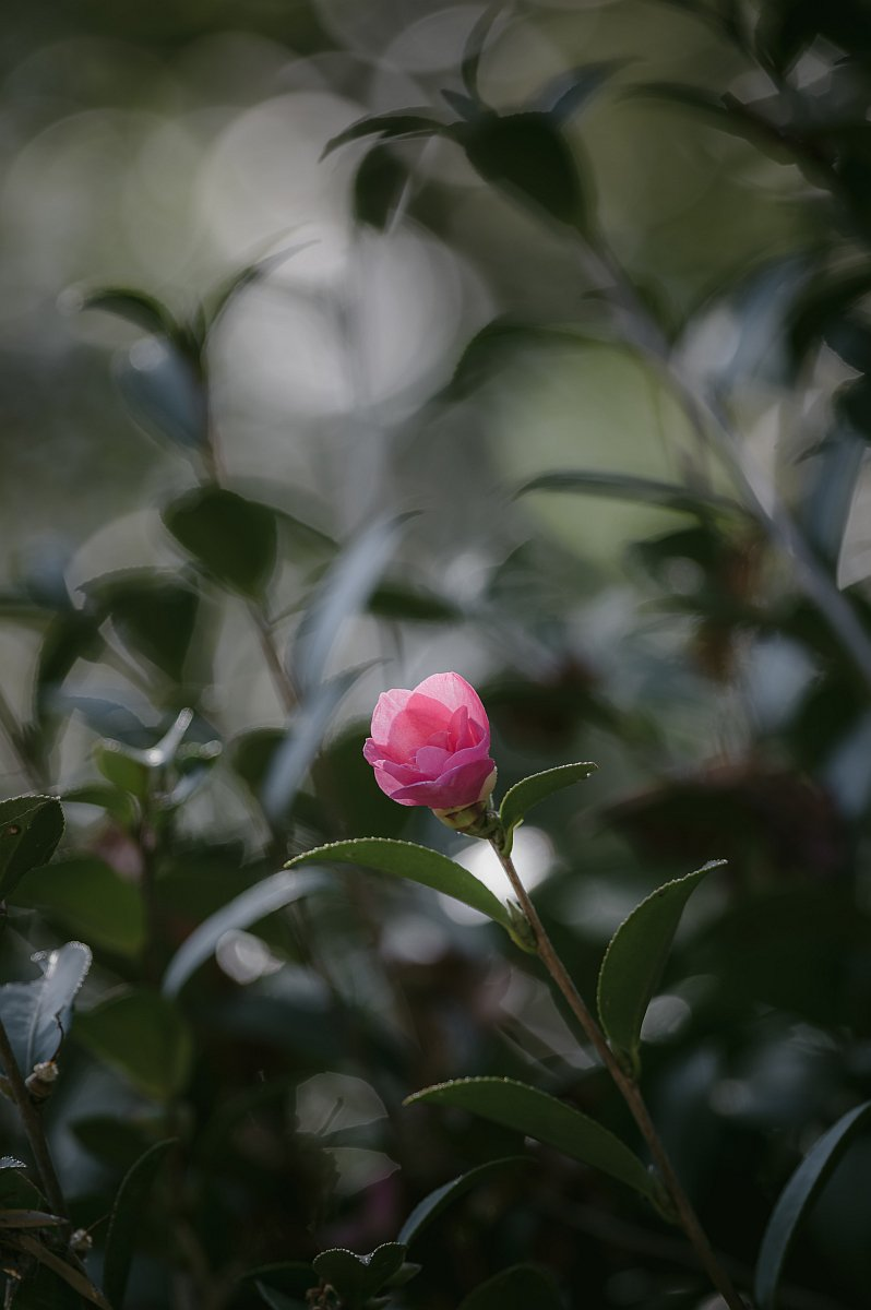 RT @pkpk_photo: ※タテ  #お花ですネン #寫眞倶楽部 #Pentax https://t.co/2uhOBAKCAs