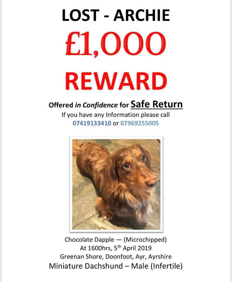 Hello Twitter friends. We are still looking for little lost dog Archie. Please help spread the word if you can. <br>http://pic.twitter.com/G9EpPUESFr