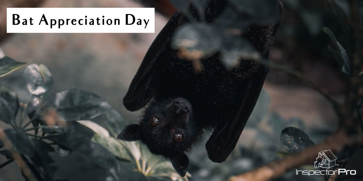 Celebrate #BatAppreciationDay with some #riskmanagement advice from the ASHI Reporter.