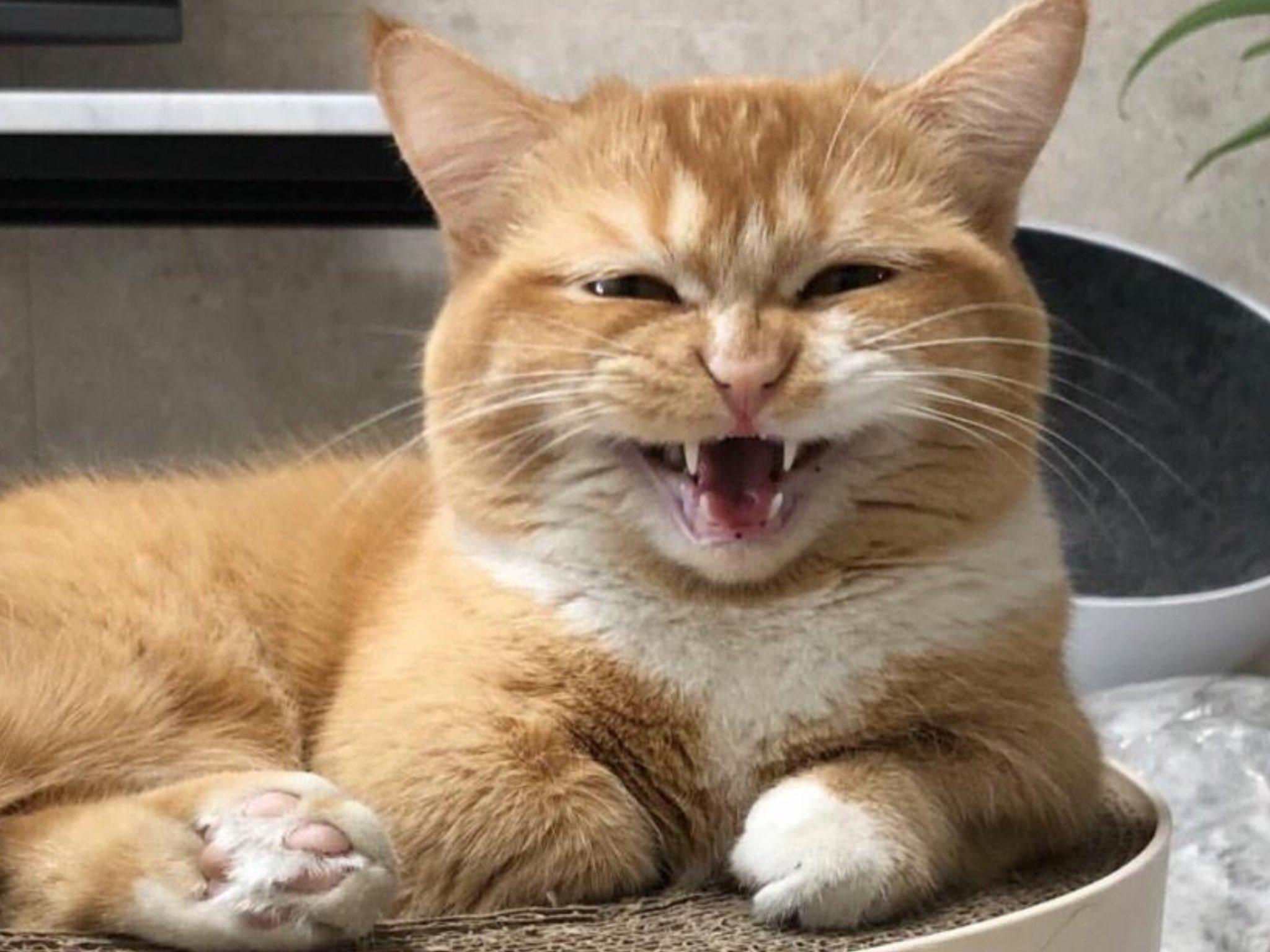 расскажу коты ржут картинки сути