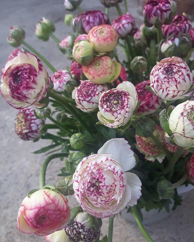 Flowers By Season Flowersbyseason Twitter