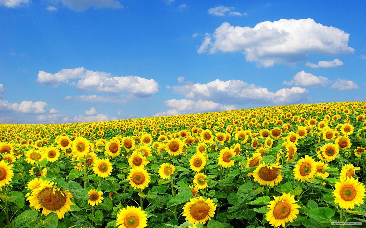 ユチョンを応援するすみんながやわらかいお水を与えあって、ユチョンという太陽に向かって咲き続けますように。自分の心をいたわりながら咲き続けますように。。。  #ユチョン #笑顔で健康にしあわせに  #長生きしよう ♡  #30年後もSrowDanceを踊りましょう ♡pic.twitter.com/CiMYvEqJ0q