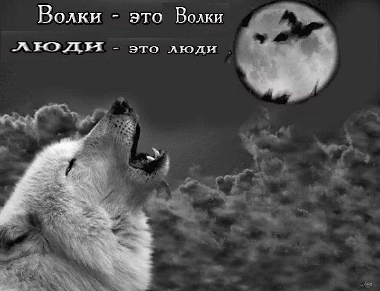 Фото волка с надписью, фон для открытки