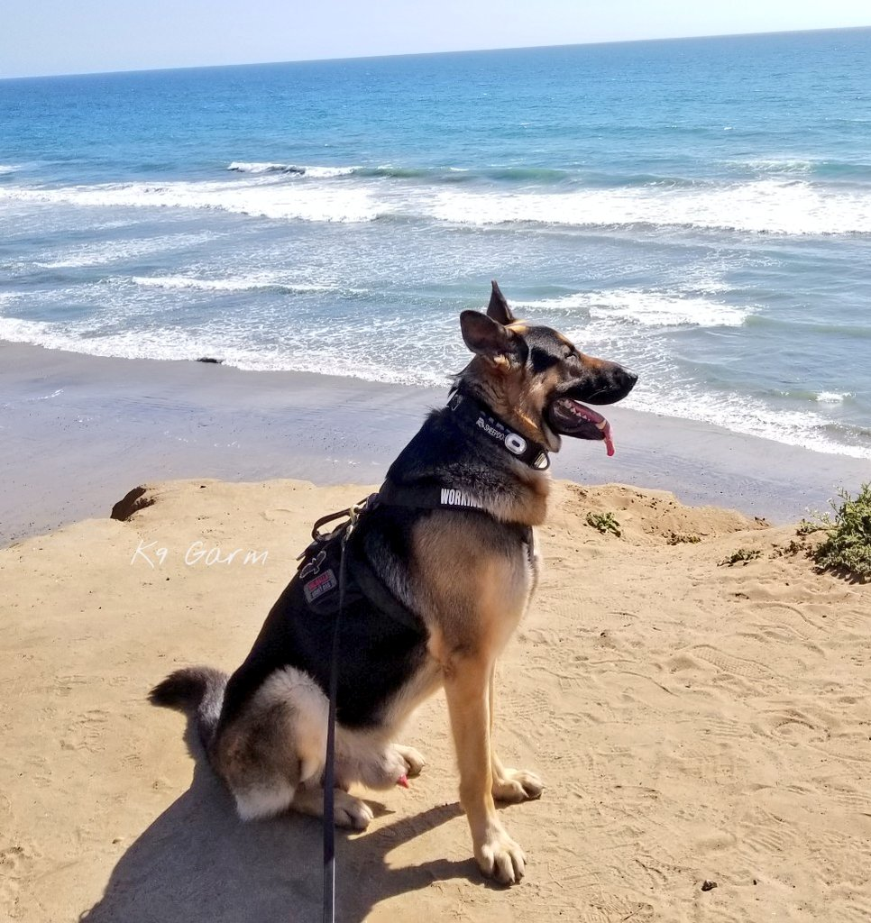 Hike by the bluffs today, 72 but we are feelin it  #K9Garm #SARK9 #dogsoftwitter #dog #dogs #germanshepherd #gsd #moosedog<br>http://pic.twitter.com/lR0RZkvP3l