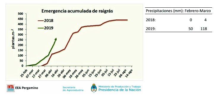 ⚠️👉🏾Inicio emergencia de #raigrass un mes antes que en 2018 ‼️ De la importancia de ajustar los flujos de emergencia de #malezas para la optimización del momento de aplicación de #herbicidas residuales ..🌱