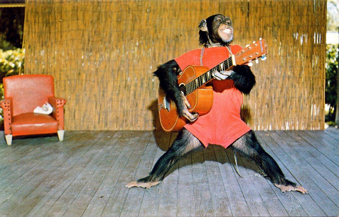 Картинка гитара смешная, открытка днем