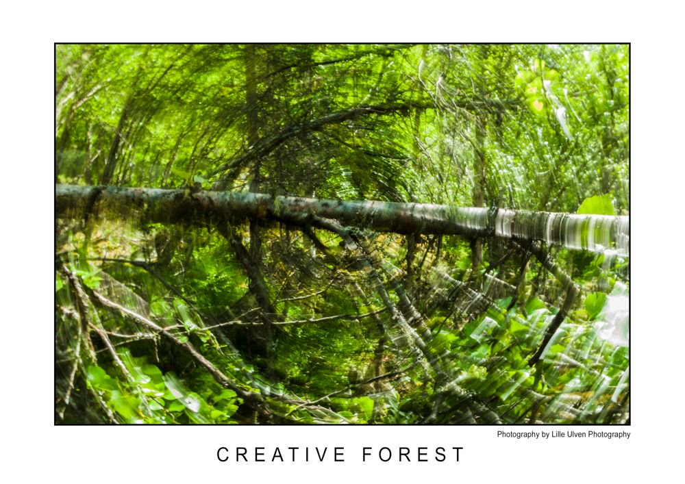 RT @lille_ulven: In the mountains of Venabu (Intentional Camera Movement, ICM)  #nature #photography #forest https://t.co/w6fWSn7v6b