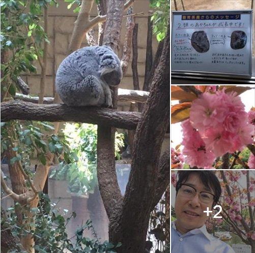 #キャストピ!    ケーブルNews月~水キャスターの織田雄二です。 気候が良くなり、外へ出かけてのんびりと過ごしたいですね。  先日、名古屋市千種区にある東山動植物園へ行ってきました!  全文はFBでご覧ください♪😊🔗https://www.facebook.com/1757999917778595/posts/2292124064366175/…  #ケーブルNews #キャスター