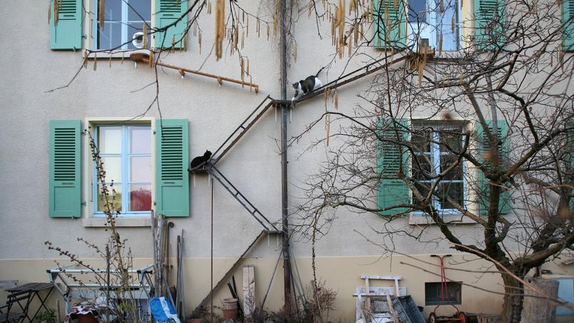 En #Suisse , ces logements s'équipent d'échelles pour chats https://t.co/OyYoESJA1f  #maison  #logement https://t.co/7o8MZBsEKg