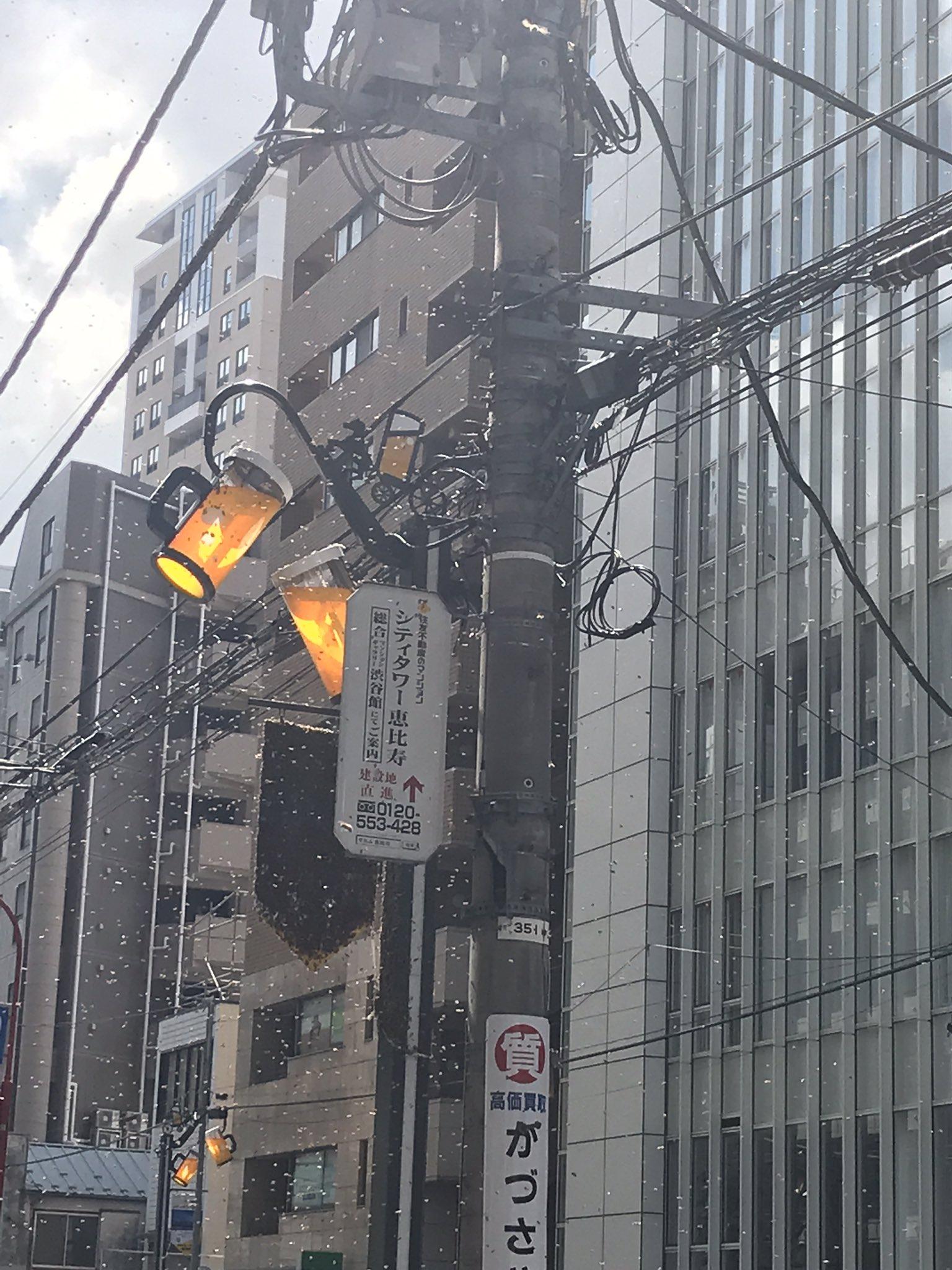 画像,@mesotokyo この蜂の大群、朝通勤の時通りかかったわ。この埃みたいなの全部ミツバチ。電柱にかかってる五角形の旗みたいなの黒いけどこれも全部ミツバチ。 h…