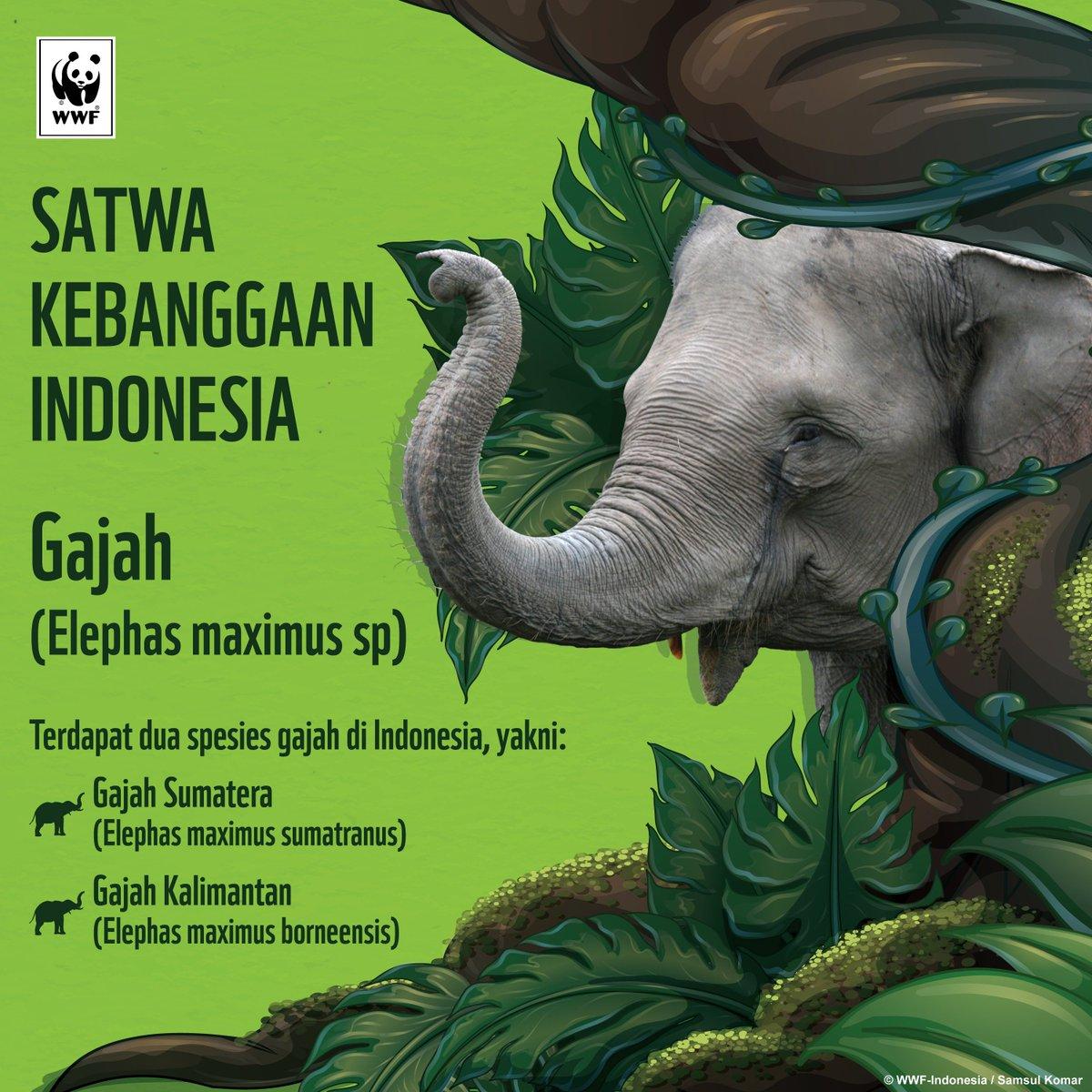 Wwf Indonesia على تويتر Sebagai Satwa Yang Membutuhkan Ruang