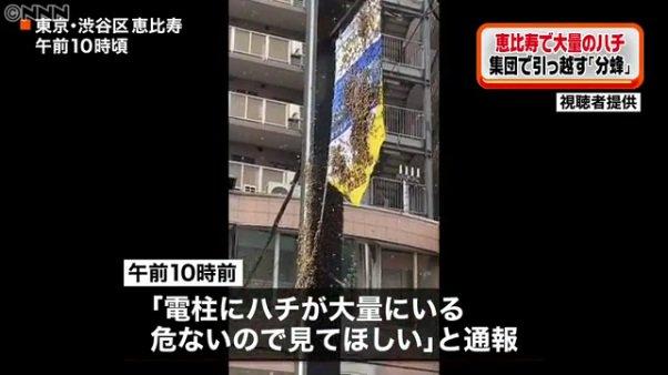 画像,渋谷区恵比寿1丁目で1万匹の蜂 大量発生の原因は「分蜂」か蜂でも「ミツバチ」やから刺される心配はないけど、1万匹もおったら気持ち悪いわな。まぁ、世界的にミツバチ…