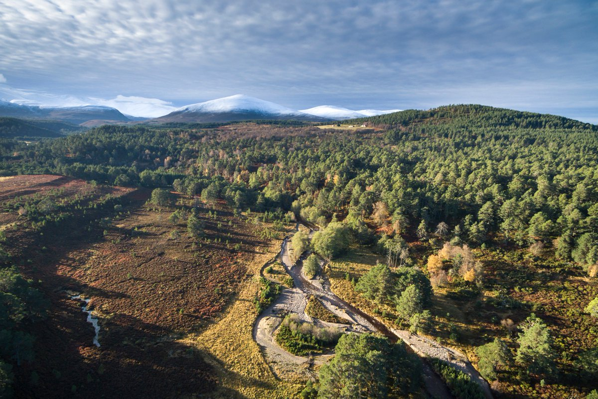 test Twitter Media - Planning a #staycation this #Easter/#Passover? #EarthDay on 22/4 is a perfect opportunity to explore wilderness in the #Cairngorms & #CambrianMountains! @EarthDayNetwork @CairngormsCo @RewildingB @EndangeredLands  #Summit2sea 🦋 https://t.co/BxqWnC2qRZ https://t.co/0u9PeDv3Wa https://t.co/IkIht2SAUF