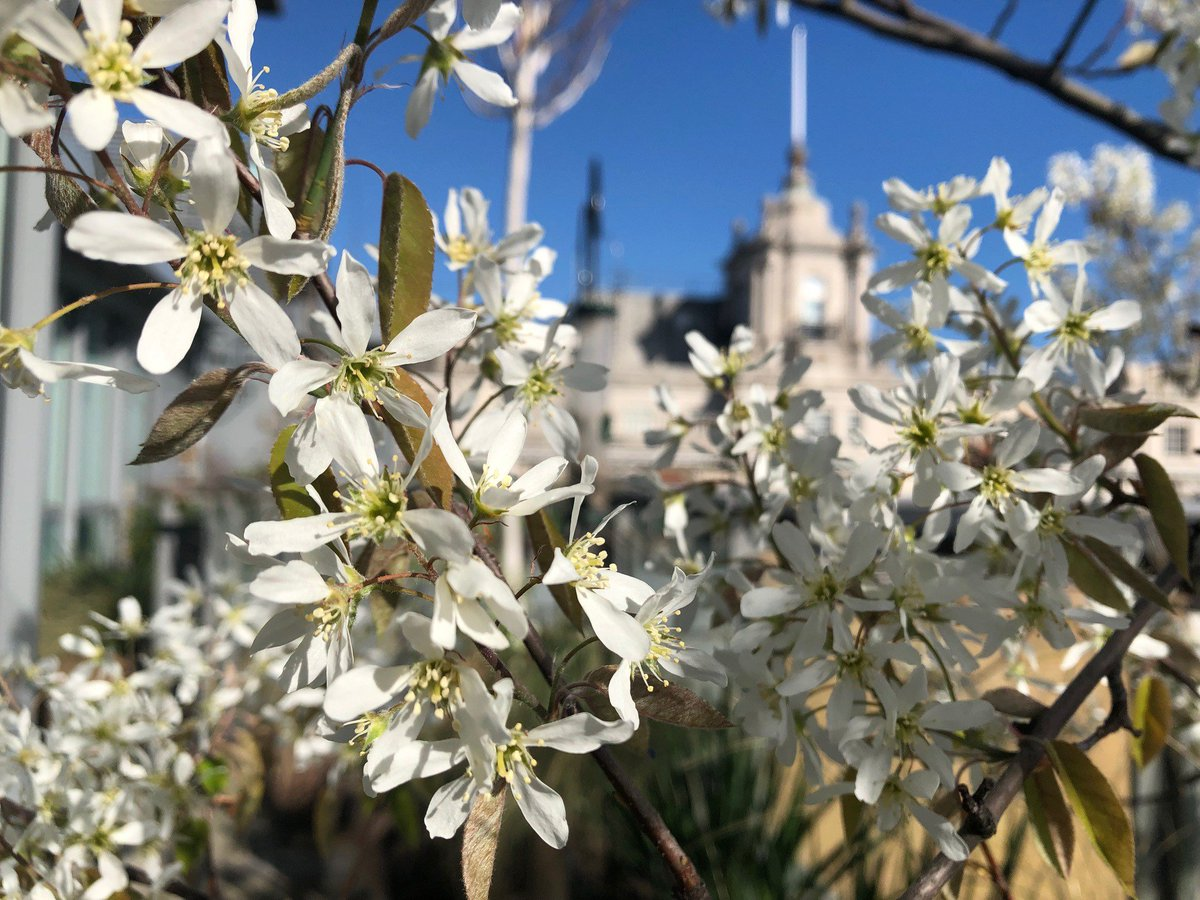 test Twitter Media - Spring in our London gardenHappy Easter & Passover! https://t.co/jUPadiPvck