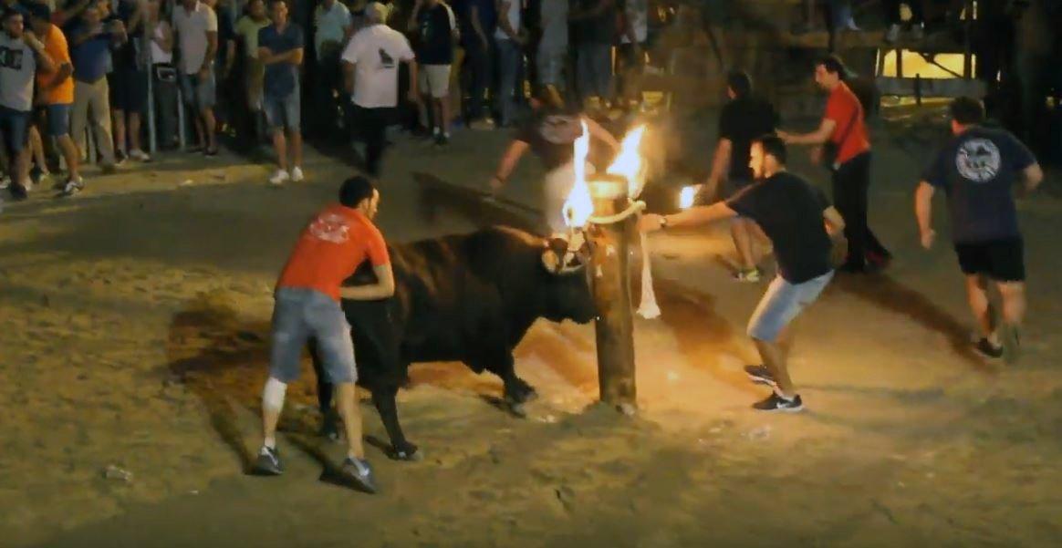 """PSPV y PP rechazan juntos en el pleno la prohibición de los """"bous al carrer"""" en el Grau de Castelló https://www.eldiario.es/_350bbb44"""