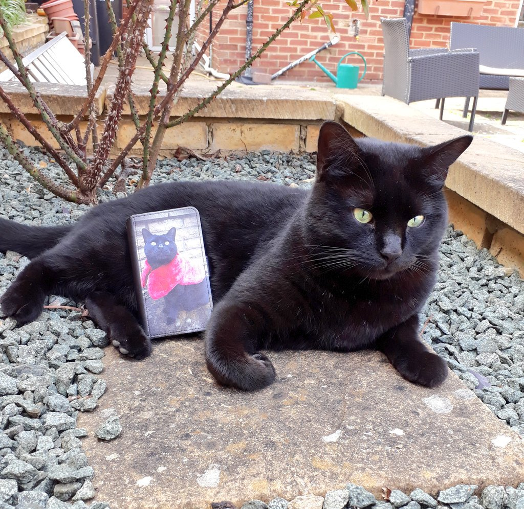 Pushkin - My mummy got a phone case with me on it!! Am I famous?  #CatsofTwitter <br>http://pic.twitter.com/QBW65LxJ2C