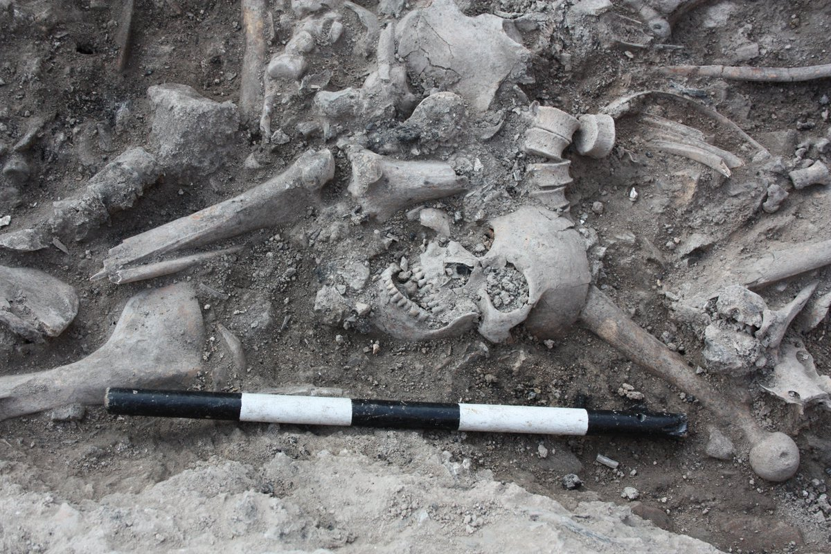 We sequenced the genomes of Crusaders who died fighting in the Near East 800 years ago https://www.cell.com/ajhg/fulltext/S0002-9297(19)30111-9…