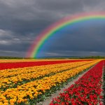 Image for the Tweet beginning: Somewhere over the rainbow there's