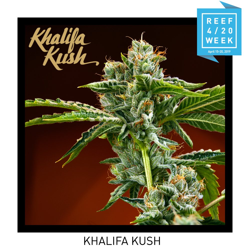 Announcement: Khalifa Kush is dropping 9AM at all Nevada Reef locations on 4/20/19. cc @wizkhalifa