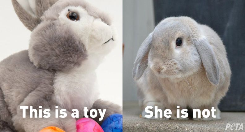 PETA On Twitter Most Rabbits Bought As Easter Gifts End Up Dead