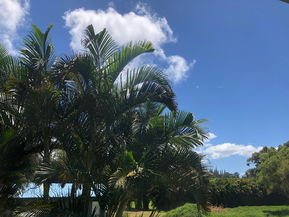 test Twitter Media - Gorgeous breezy day on the North Shore.  #cmweather #Maui ##blue #green #nature https://t.co/bO3bLdTZVS