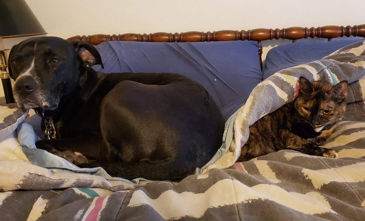Here is my goofy #pibble and #tortiseshell to take away the stress of today. pic.twitter.com/TZfwZ53mrE